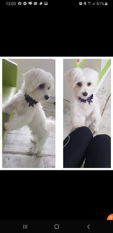 Salon frizerie canină si felina Fashionpet