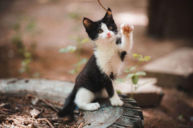 Отдам котенка, мальчик, 1.5 месяцев