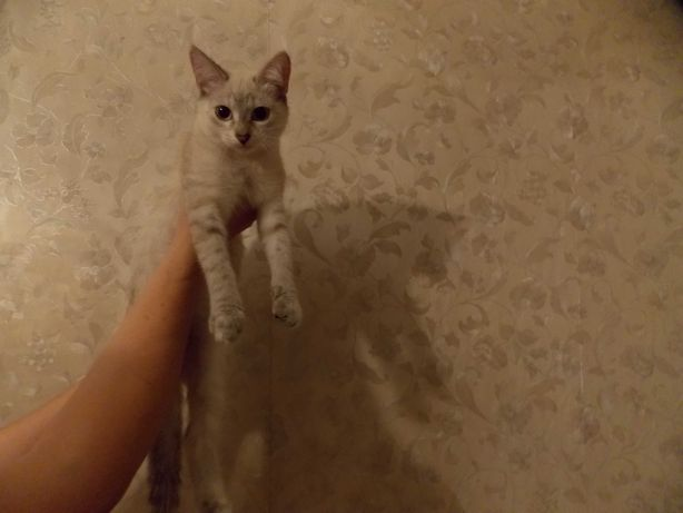 Котята Девочки!!! Красавицы!!! Охотницы на мышей!!!