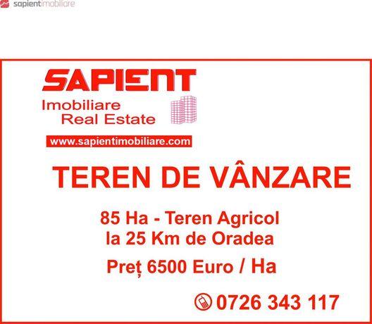 SAPIENT | Teren agricol, 85 Ha Judetul Bihor