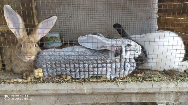 Кролики 4 штуки .
