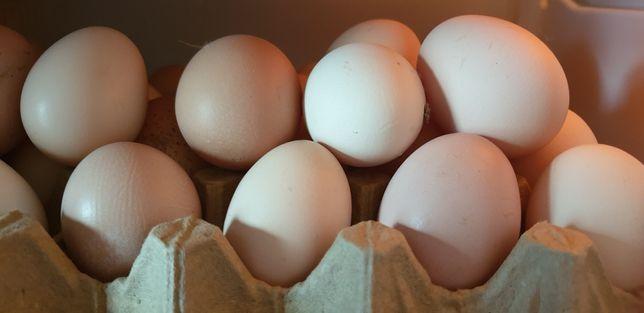Продаем Домашние яйца