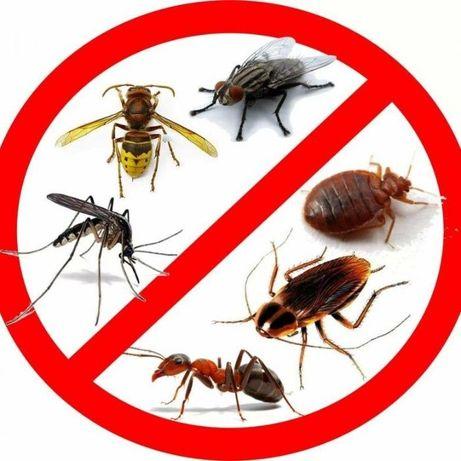 Уничтожение клопов Дезинфекция, тараканов, муравьев,мышей ,крыс!