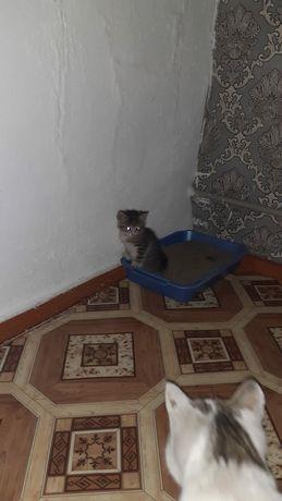 Бесплатно котенок