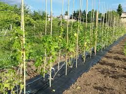 Folie Agrotextil-pentru amenajari Horticole/Gradini/Sere/Solarii, UV