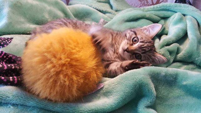 Котенок-мальчик в добрые руки