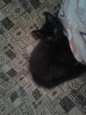 Котёночек мальчик