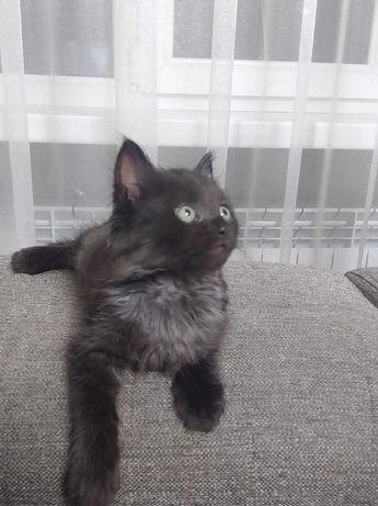 Кошечка. 2 месяца.