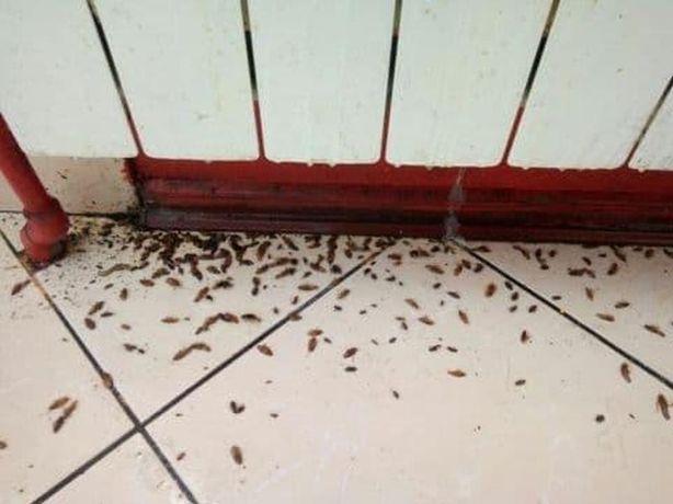 Дезинфекция от клопов, тараканов, клещей, муравьев, мышей, крыс
