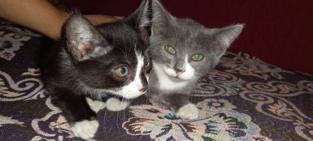 Отдам котят в хорошие руки, котятам по 2 месяца