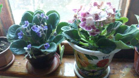 Продам комнатные растения разного вида
