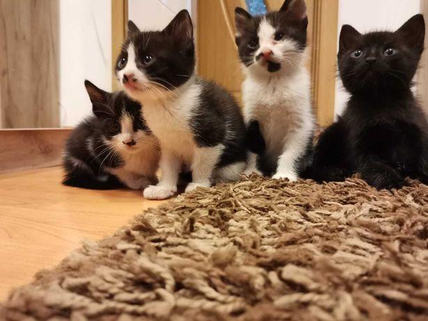 Pisici pentru adopție
