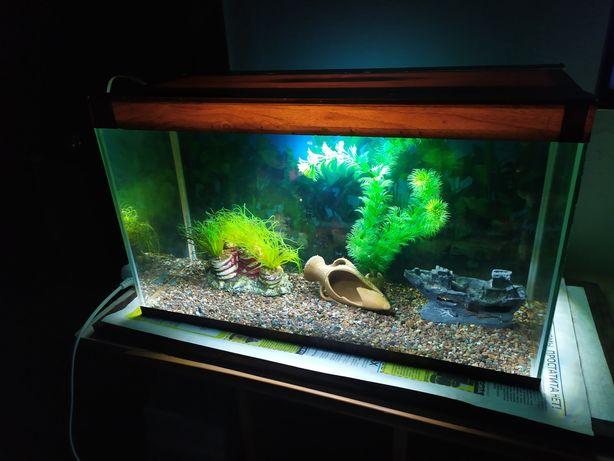 Аквариум + бонусы и рыбки.
