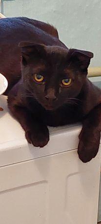 Найден кот вислоухий в Балыкшах. Желающие могут забрать.