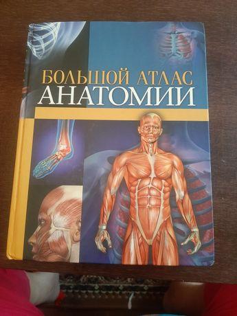 Продам большой атлас анатомии