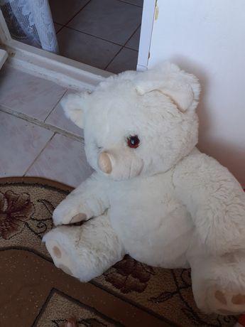 Urs mare plus 60cm