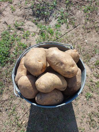 Домашний едовой картофель
