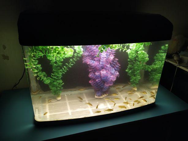 Заводской аквариум 104л + бонусы и рыбки.