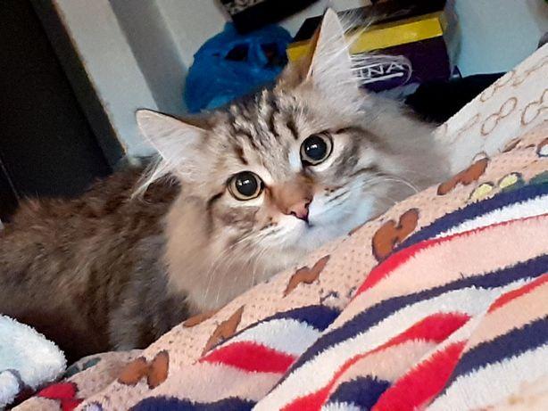 Пропал кот 9 месяцев, микояна