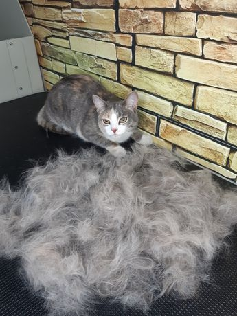 Безопасная альтернатива стрижки кошек- вычесывания!