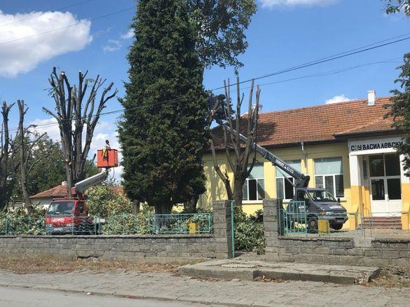 Рязане на дървета , Косене на трева, почистване на терени Варна гр. Варна - image 4