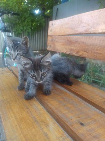 Отдам в хорошие руки 3х маленьких котят