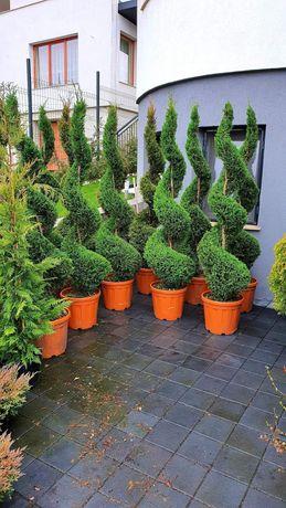 Plante diferite specii