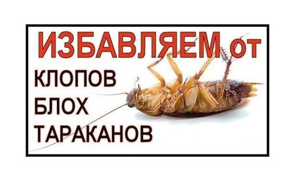 Дезинфекция в Усть-Каменогорске