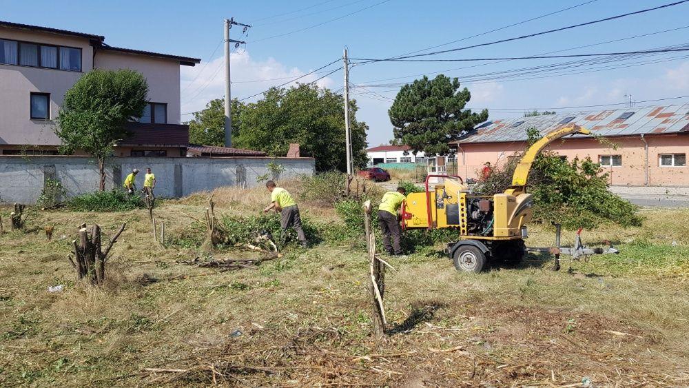 Cosire curatare - defrisare terenuri iarba arbusti rugi ambrozie