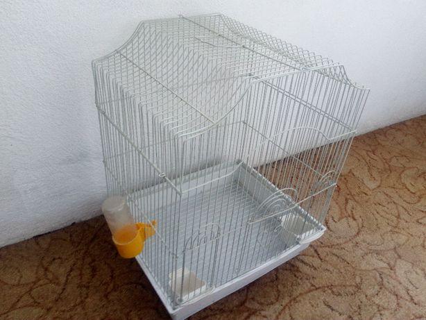 C O L I V I E -perusi,papagali