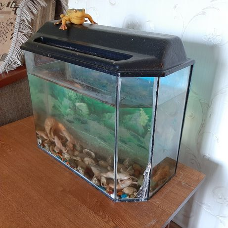 Продам аквариум с лягушками