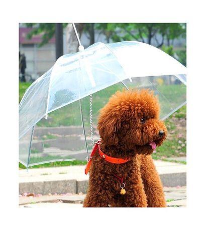 Umbrela pentru catei