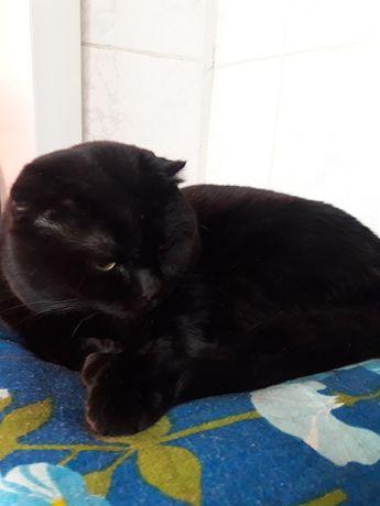 Отдам кота черного