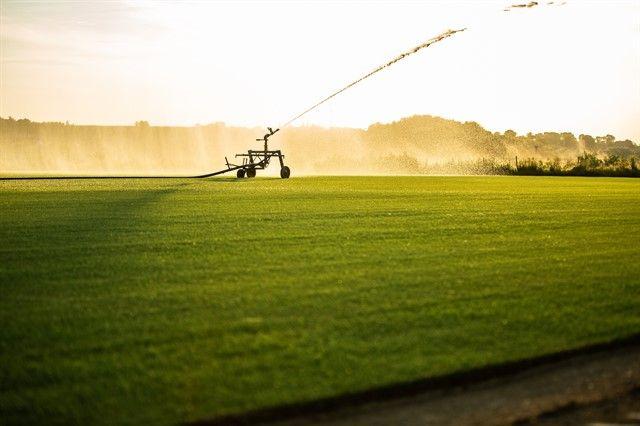 Rulouri de gazon natural, gazon rulou-Ferma productie Timisoara