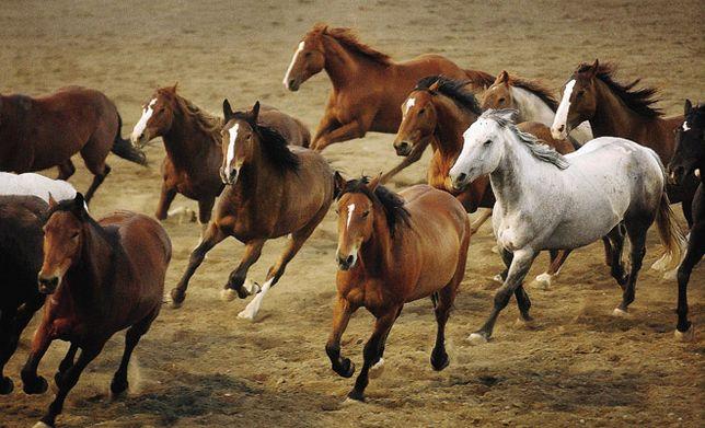 Продам косяк лошадей