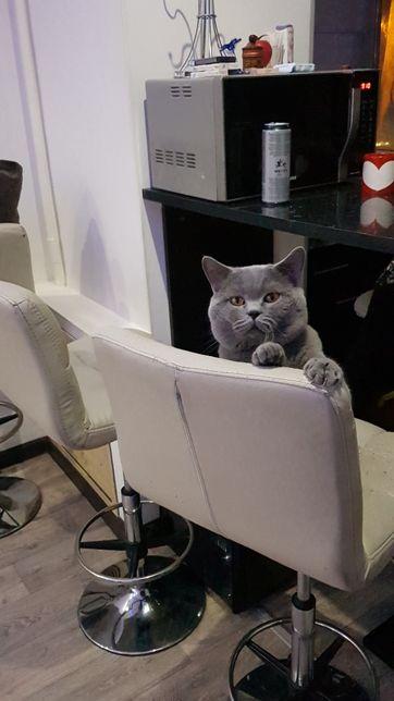Вязка опытного кота, с документами!