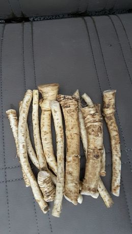 Продавам корени хрян