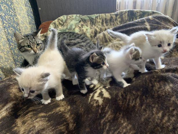Котята в надежные и заботливые руки