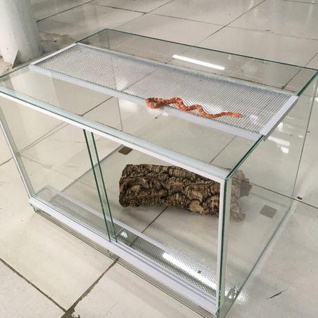 Змея маисовый полоз с террариумом