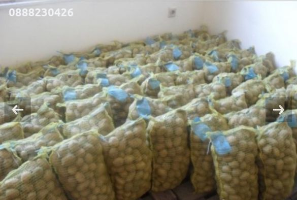 Семена картофи клас А - РАЗПРОДАЖБА