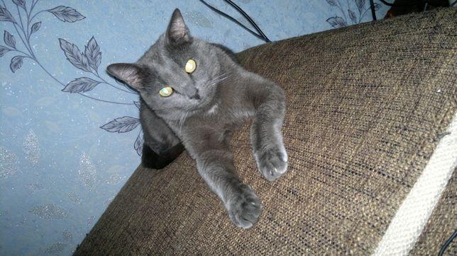 Потеряли кота серого цвета в районе улицы Пожарского и Рыскулова