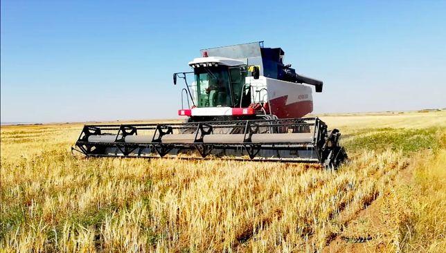 Уборка зерновых культур. Комбайн в аренду