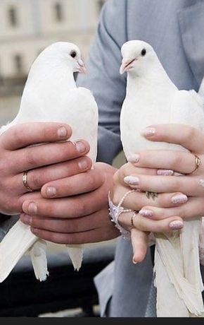 Бели гълъби за сватба