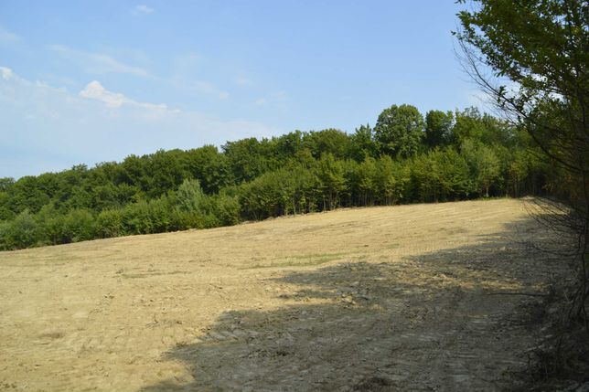 Vand teren intravilan in localitatea Curtuiusu Mic, Maramures