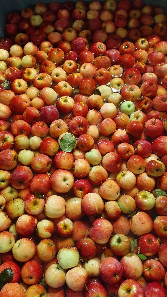 Suc de mere . 1,5 ron kg cu merele d-voastră.