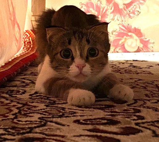 Котенок мысық