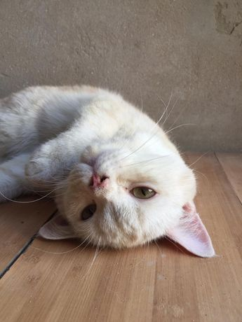 Вязка котов
