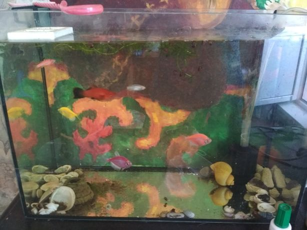 Продам аквариум 20 литров