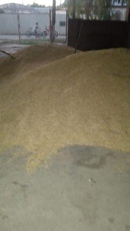 Зерно чистый ячмень