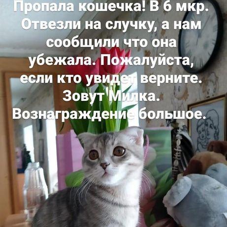 Помогите найти кошку.За вознаграждение!!!
